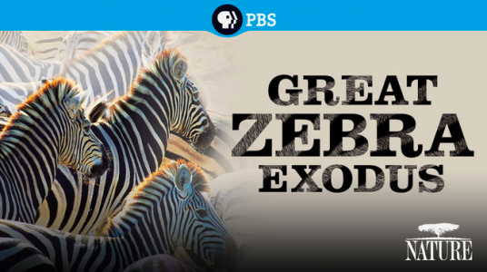 Great Zebra Exodus