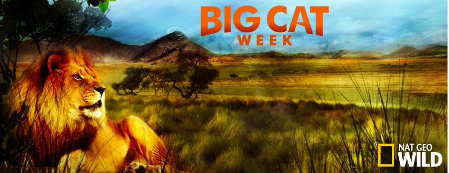 Big Cat Week