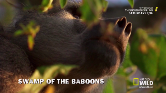 Swamp of the Baboons